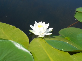 Enjoy water lillies.